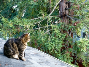 Kitty contemplating the day, January 21, 2012