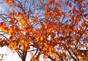 Afternoon leaves, 3:40 PM, December 26, 2012