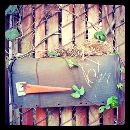 Postal perch, January 22, 2013