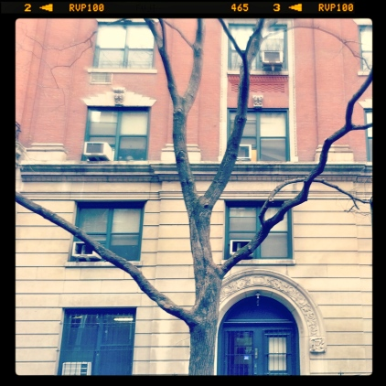Arch and branches, January 29, 2013