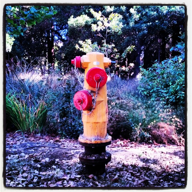 Raspberry and lemon popsicle-colored fire hydrant, August 27, 2013