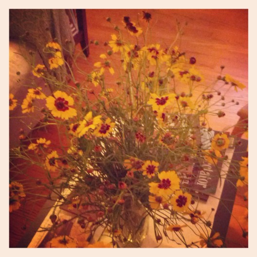 Coreopsis flowers, September 30, 2013