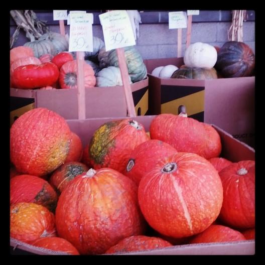 Pumpkins, October 20. 2013