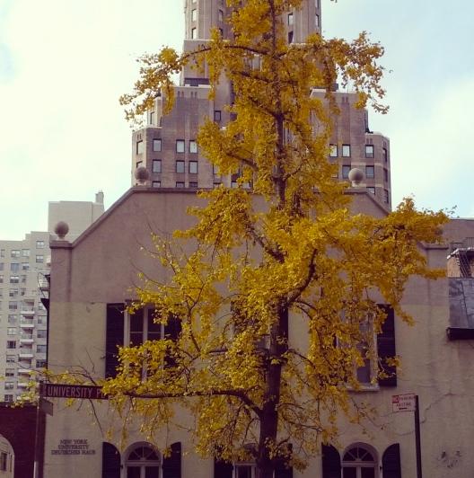 Tree outreach, November 21, 2013