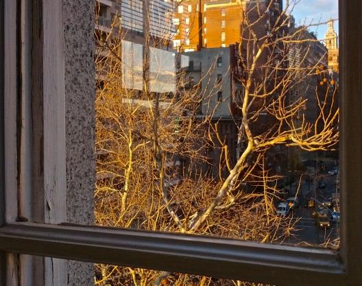 Bare branches, green ornaments (?), 3:40 PM, November 29, 2013