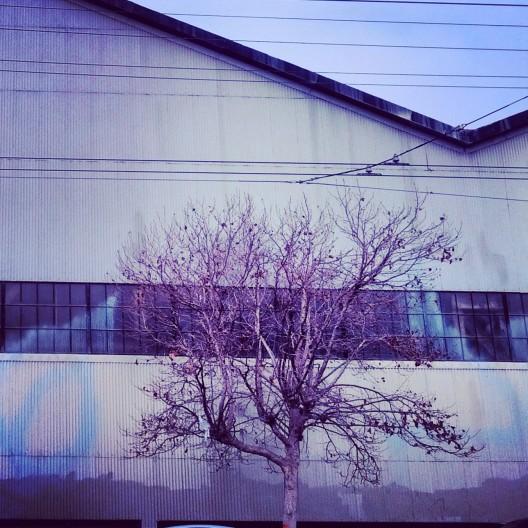 Warehouse wall, tree, January 7, 2014