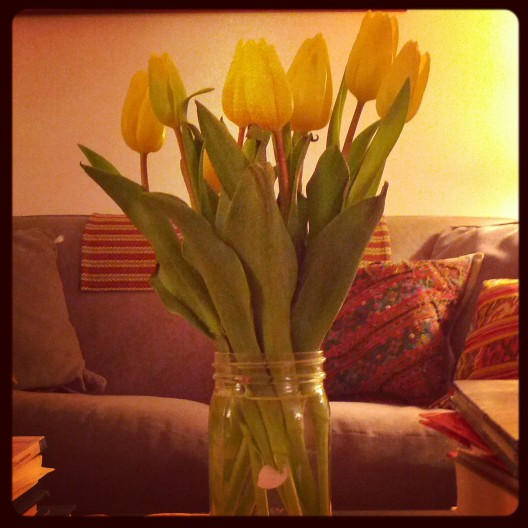 Yellow tulips, January 28, 2014