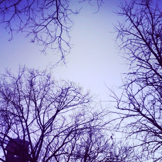 Bare branches against sky, January 30, 2014