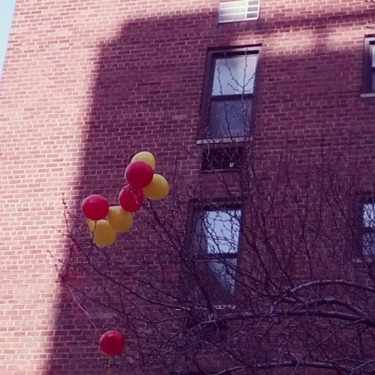 Balloons stuck in tree branches, February 23, 2014