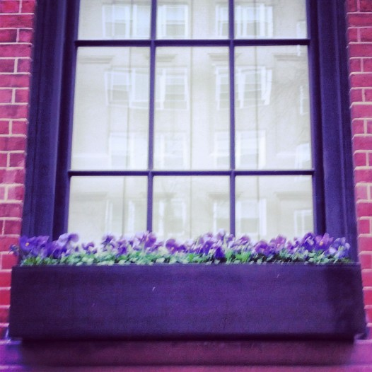 Pansies! March 29, 2014
