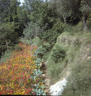 """Flowers seen from chairlift on way to Anacapri,"" May 31 (?), 1964"