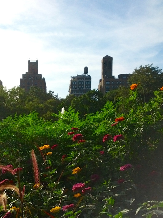 Washington Square Park zinnias, August 29, 2014