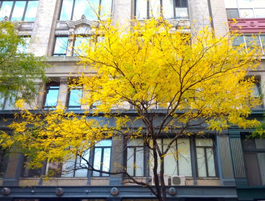 A tree on 12th St., November 3, 2014