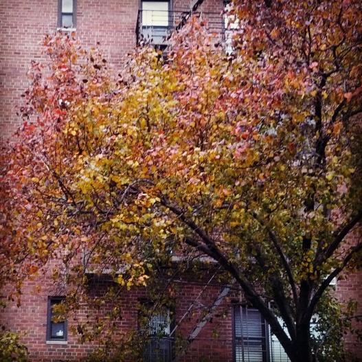 Brick-toned leaves against a brick wall, November 28, 2014