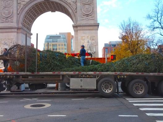Tree truck, December 1, 2014