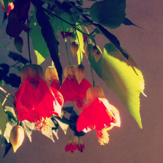 Bell-shaped flowers, 3:50 PM January 23, 2015