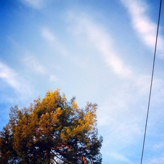 Tree, sky, telephone wire, January 27, 2015