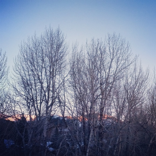 Winter trees, light on distant mountains, February 16, 2015