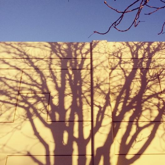Tree shadow, February 23, 2015