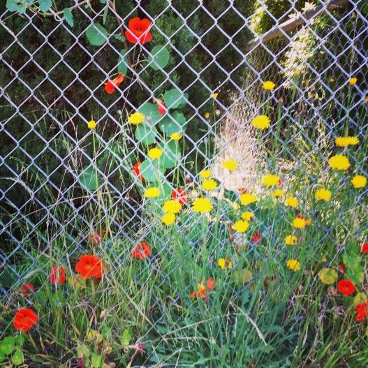 Flowers, trending upwards, June 2, 2015