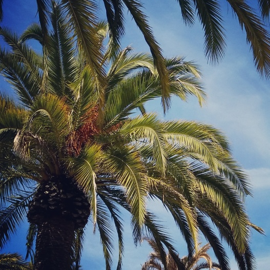 Palm tree, June 20 2015