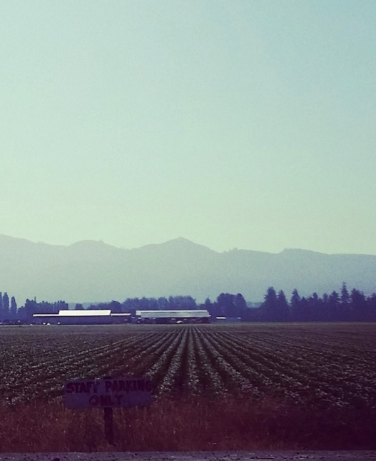 View from Snow Goose Produce, 8:00 AM July 2, 2015