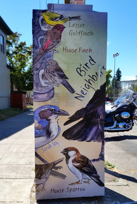 Utility box birds, August 28, 2015