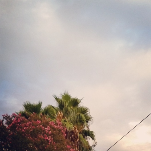 Flowering tree and palm tree, 6:50 PM September 9, 2015