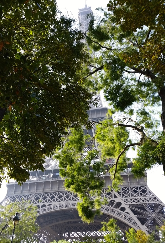Eiffel tower through leaves, October 11, 2015