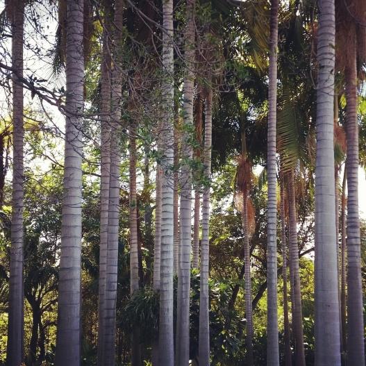 Palm tree trunks, November 10, 2015